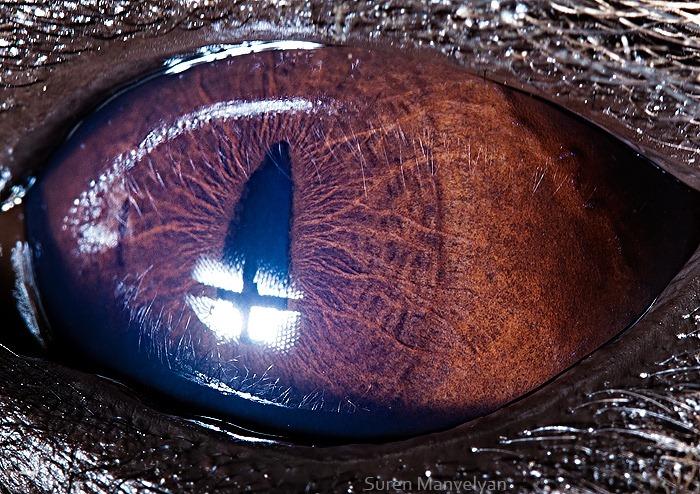 animal-eyes-16