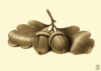 acorn2