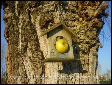 Ghiotte-leccornie-per-gli-uccellini-[18]