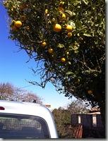 Naranjas 2