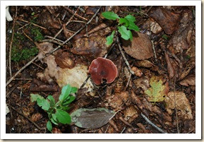 fungus 4