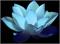 Image of a Blue Lotus: Haiku Flow Logo Image