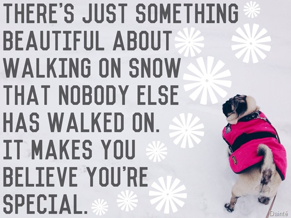 luna the pug snow slovenia city dainte winter quote