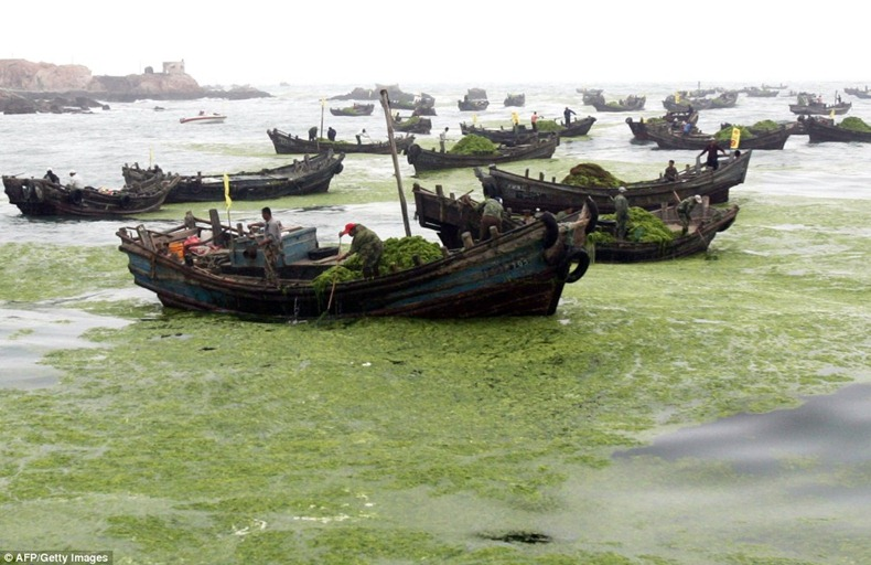 chinese-algae8
