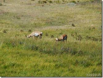 110825 NP Yellowstone (43)