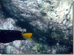 Punta Cana 360