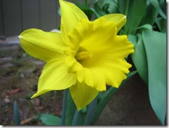 planting-flowers-1204-6