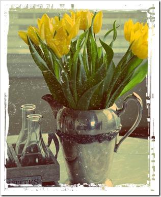 aladdin, subtle, scan tulips