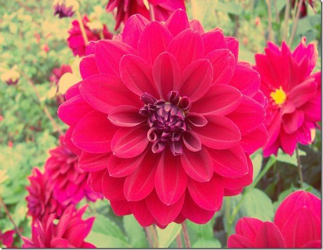 flowersE