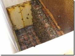 Přítel včelař Dostal UNO30,4,2012 015