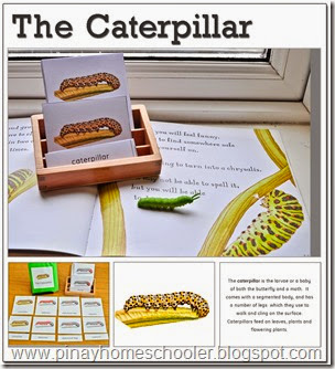 The Caterpillar Learning Pack