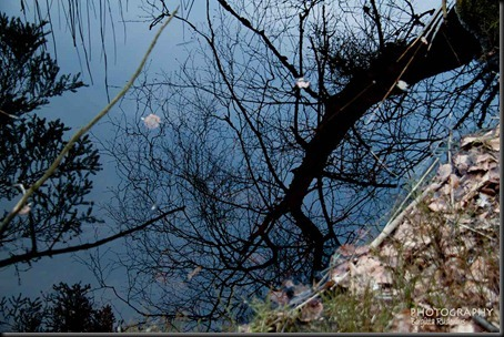tree_20120408_reflection