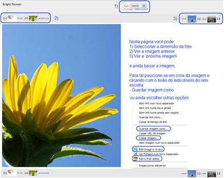 imagebase - brigth flower