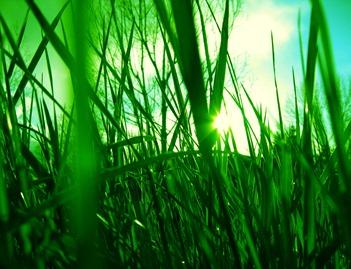 grass_sun