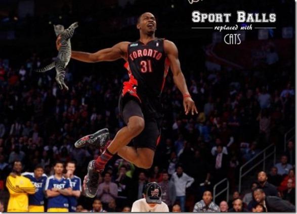 cats-sports-photoshop-1