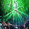 108bambooforest18X24Aug08.JPG