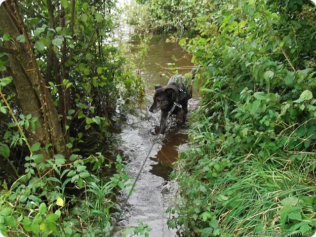 path under water!