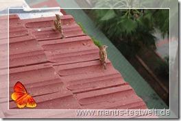 Vgel auf dem Dach