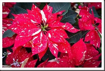 2011Dec31-Brookside-Gardens-38
