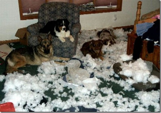 funny-cats-dogs-destroy-house-013
