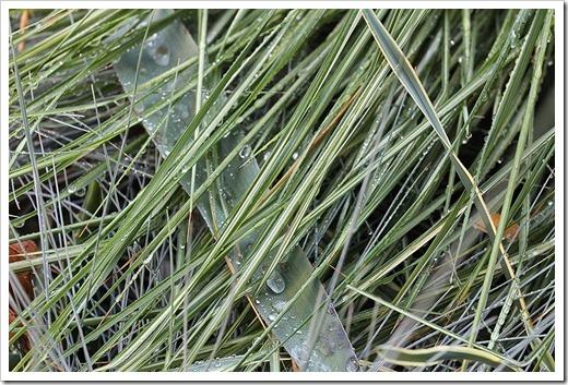 111005_rain_eldorado_grass