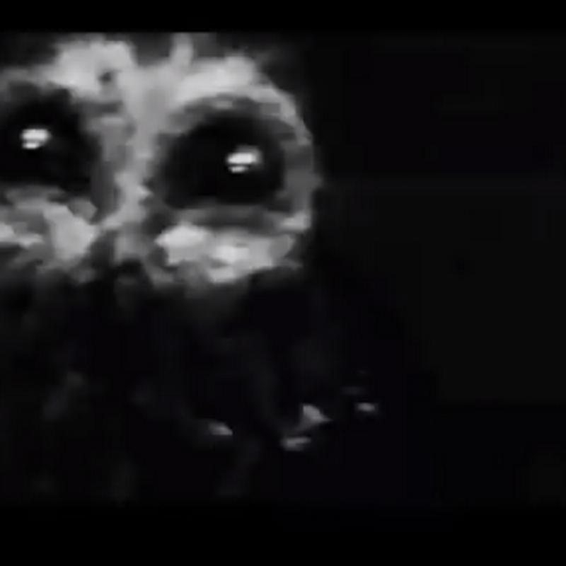 El extraño caso del terrible y temible hombre búho