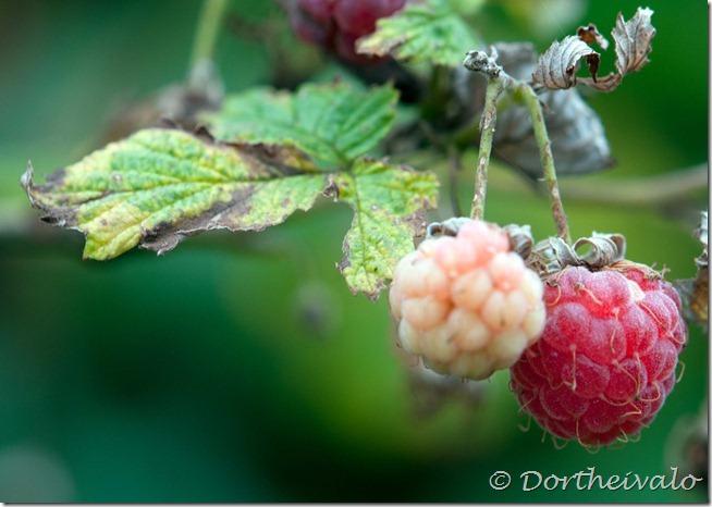 flerehindbær