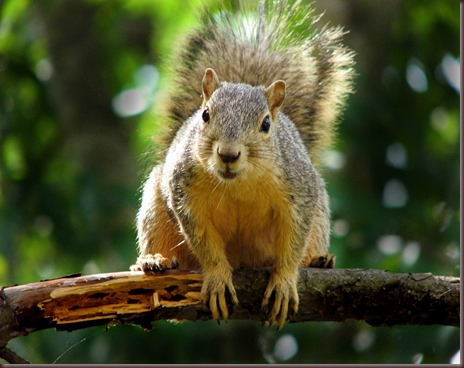 Amazing Animals Pictures Squirell (1)