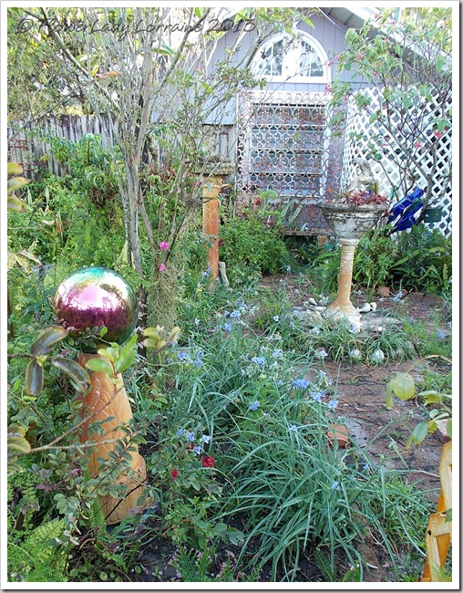 04-20-spiderwort
