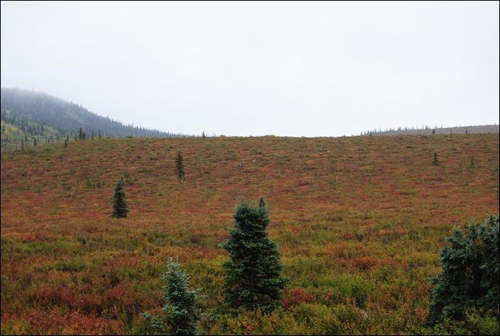 2013_08_Alaska 1182
