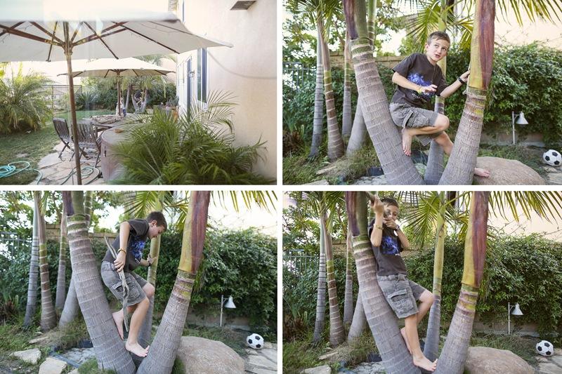 palm climbing