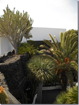Lanzarote mare 476