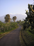Cacti near the starting point for Salak 1 at Cimelati (Daniel Quinn, 2009)