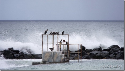 05 Cormorants & waves crashing Strandfontein Beach False Bay R310 Cape Pennisula ZA (1024x574)