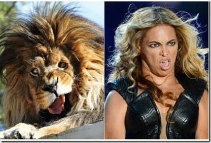 """Leão """"sósia"""" de Beyoncé faz sucesso na internet"""