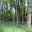 primavera_10_20101008_1286658886.jpg