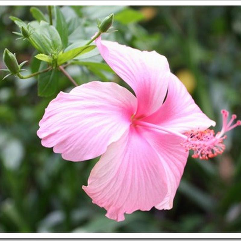 Marquesan flora