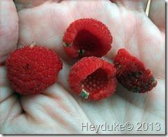 Thimble Berries