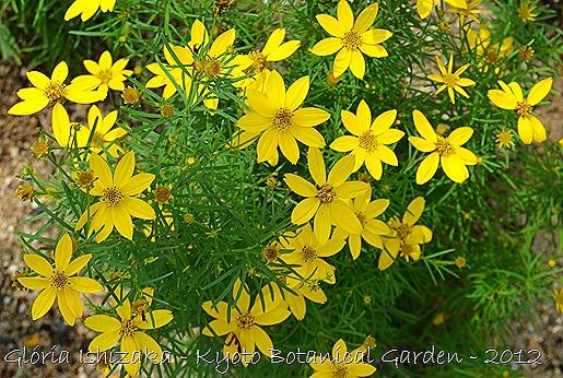 Glória Ishizaka -   Kyoto Botanical Garden 2012 - 65