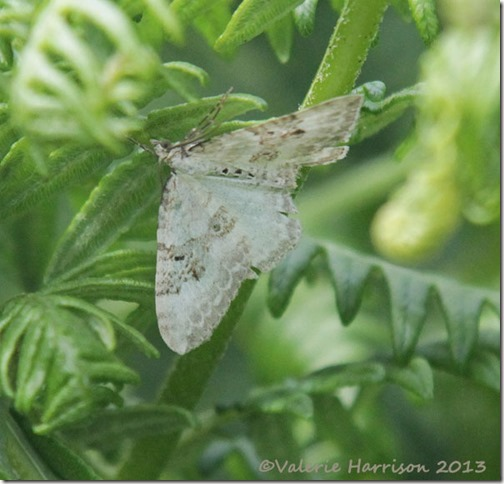 54-silver-ground-carpet