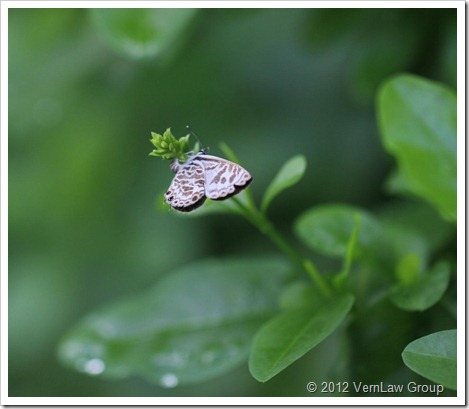 ButterflyIMG7652
