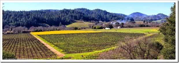 Weekend outing to the Dry Creek Valley wine country