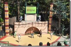 San Diego  Zoo 10