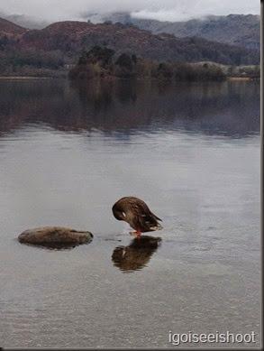 Lake Grasmere, Lake District England