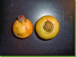 Cas Guava