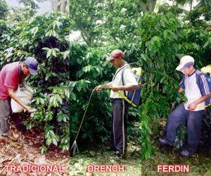 fertilizacion01