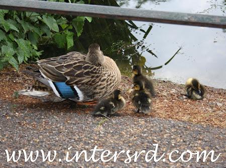 2011_05_07 Viagem a Londres 21.jpg