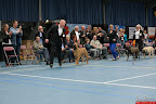 20130510-Bullmastiff-Worldcup-1325.jpg