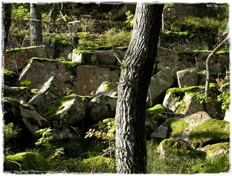 11 skogen