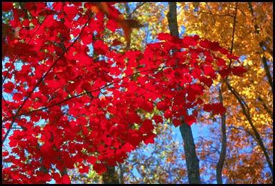 fall9